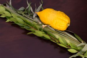 Send Lulav & Esrog Individually Preassembled (comes with case)